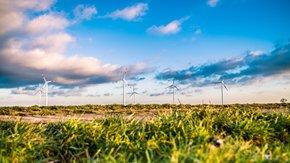Suivi environnemental – parc éolien Suivi de mortalité (oiseaux et chauves-souris)
